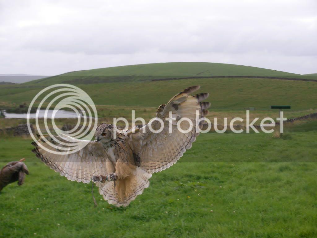Falconry SANY0064