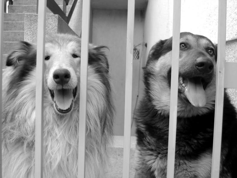 Psi kao vjerni pratitelji King_toy