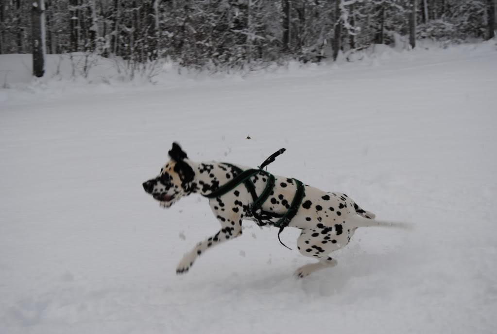 [avsluttet] Fotokonk. Februar - Lek i snø DSC_0612