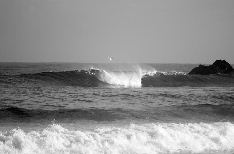 Surfeando en Blanco y Negro IMG_2339