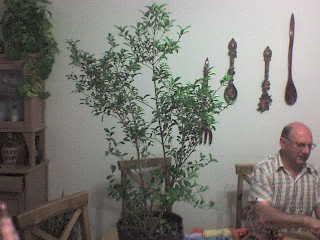 Eugenia (Eugenia uniflora) DSC01332