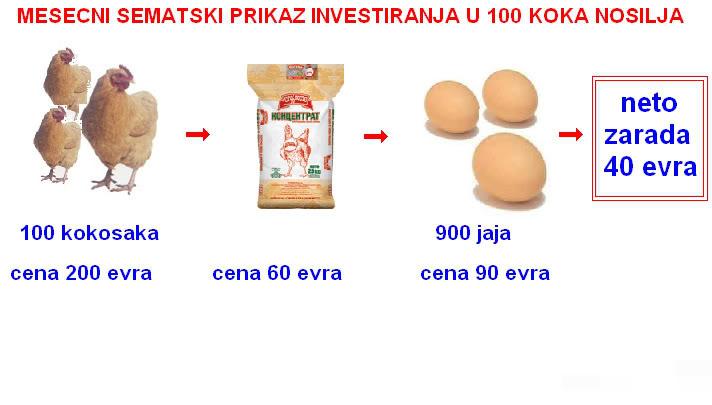 Da li investirati 25.000 dinara mesecno? - Page 2 100-2