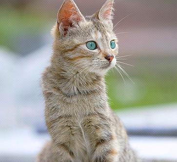 we were born for this - Hazelcloud of MistClan Catcat