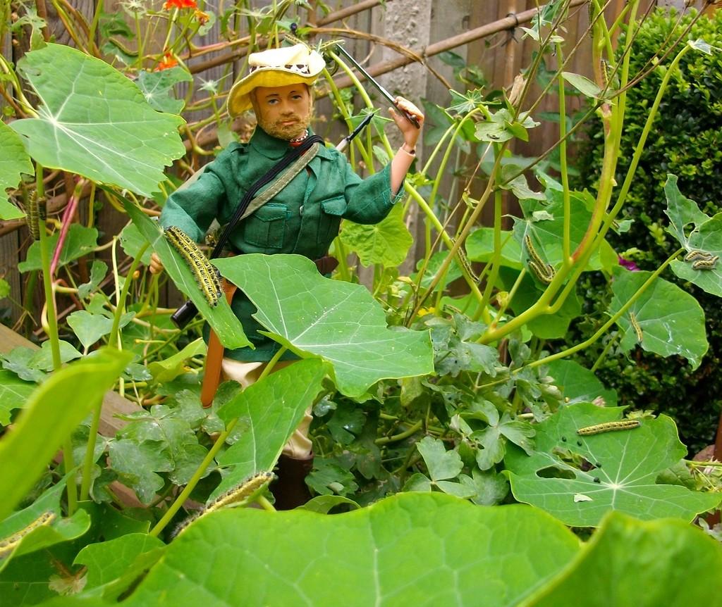 Jungle Explorer Experdition -Danger on every leaf.... IMGP9051_zpspasshgc6