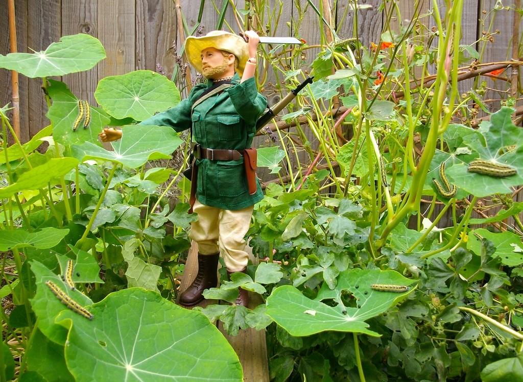 Jungle Explorer Experdition -Danger on every leaf.... IMGP9064_zpsevsy93xq