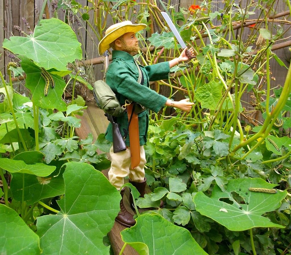 Jungle Explorer Experdition -Danger on every leaf.... IMGP9068_zpsmqcns3bt