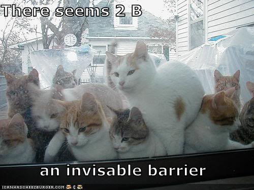 Just a Few of Heero's Pictures Funny-pictures-invisible-cat-barrie