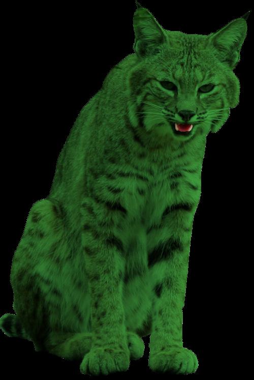 Lynx and Lynx?  BeastBoyLynx