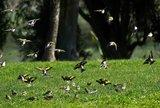 Slike divljih ptica Th_Jatolivada