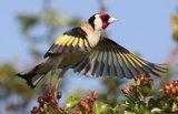 Slike divljih ptica Th_OR175831