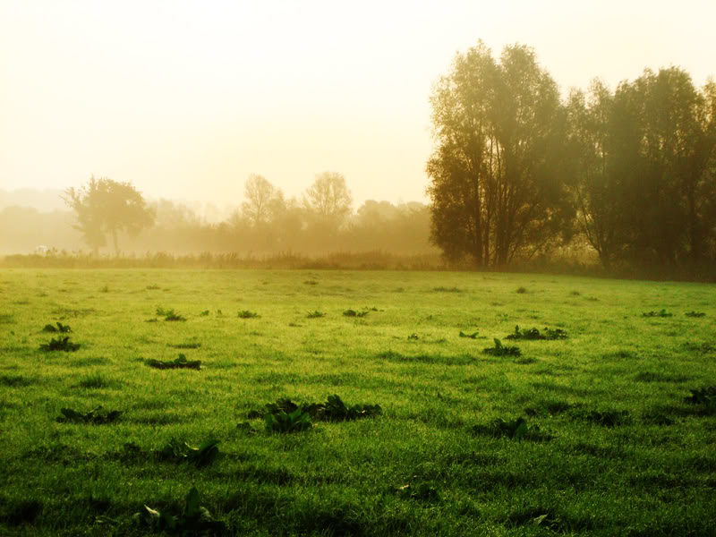 641107_47521288.jpg misty meadow image by myamaz0508