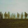 Loterie d'equus world I2-1