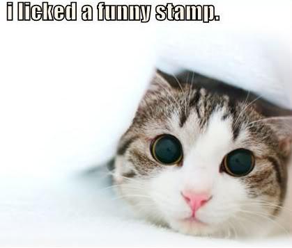 Funny pictures Lolcatz2