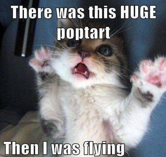 Lyrics + LOLs 4-28-12-caturday-funny-cat-photos-cute1jpgpagespeedceiLzEJU3XHy_zps73e991d3