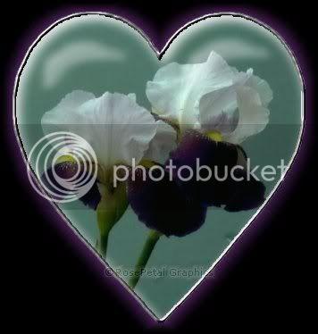 se enteraron Iris