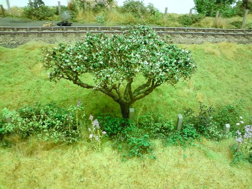 Introducing Treemendus SHOPPHOTOS049