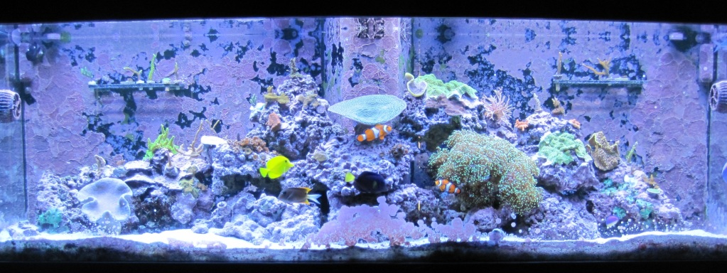 Questions regarding coralline algae IMG_2798