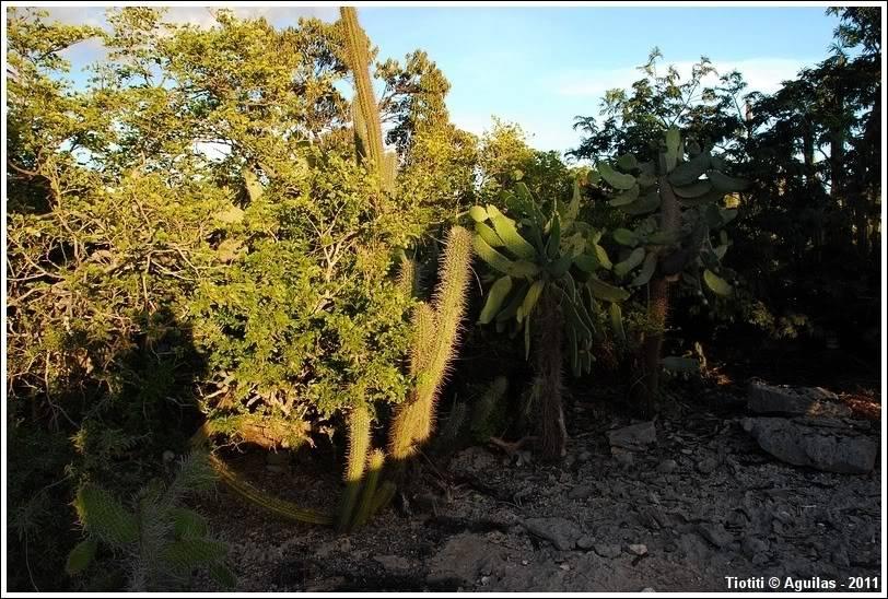 République Dominicaine. Le sud BahiadelasAguilas_0287