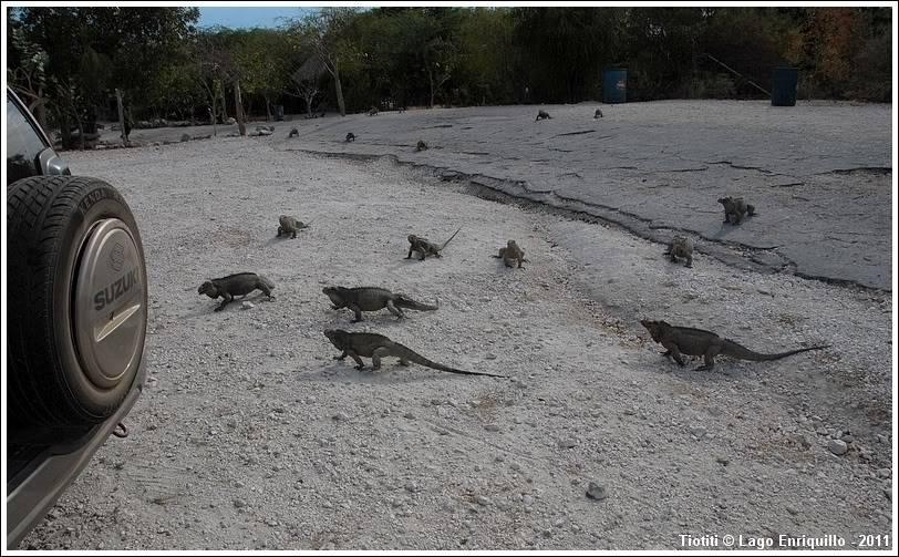 République Dominicaine. Le sud LagoEnriquillo_0398