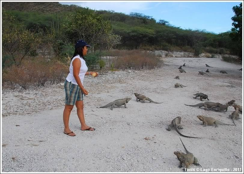 [Fil ouvert à tous] Reptiles, serpents, tortues, amphibiens, ... LagoEnriquillo_0432