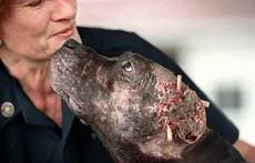 You Hate Dog Fighting Because... - Page 2 A2-2