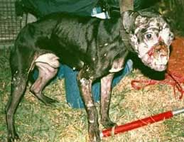 You Hate Dog Fighting Because... - Page 2 A4