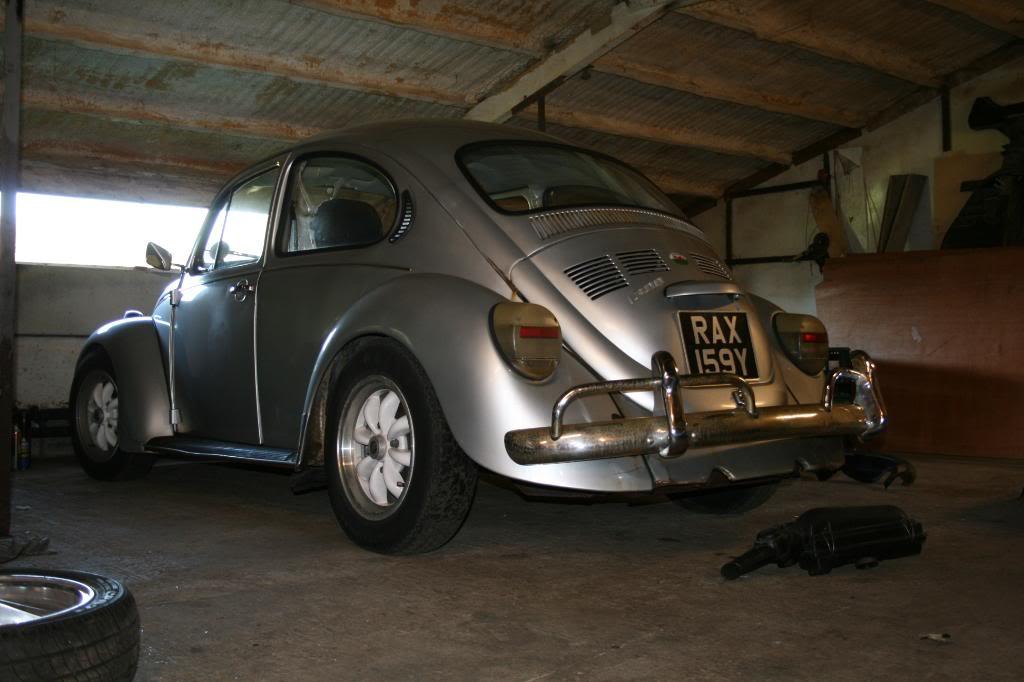 Santiago - mexican beetle IMG_9025