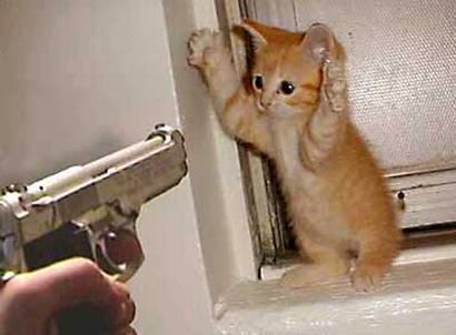 funny animal pics Cat_burglar__oPt