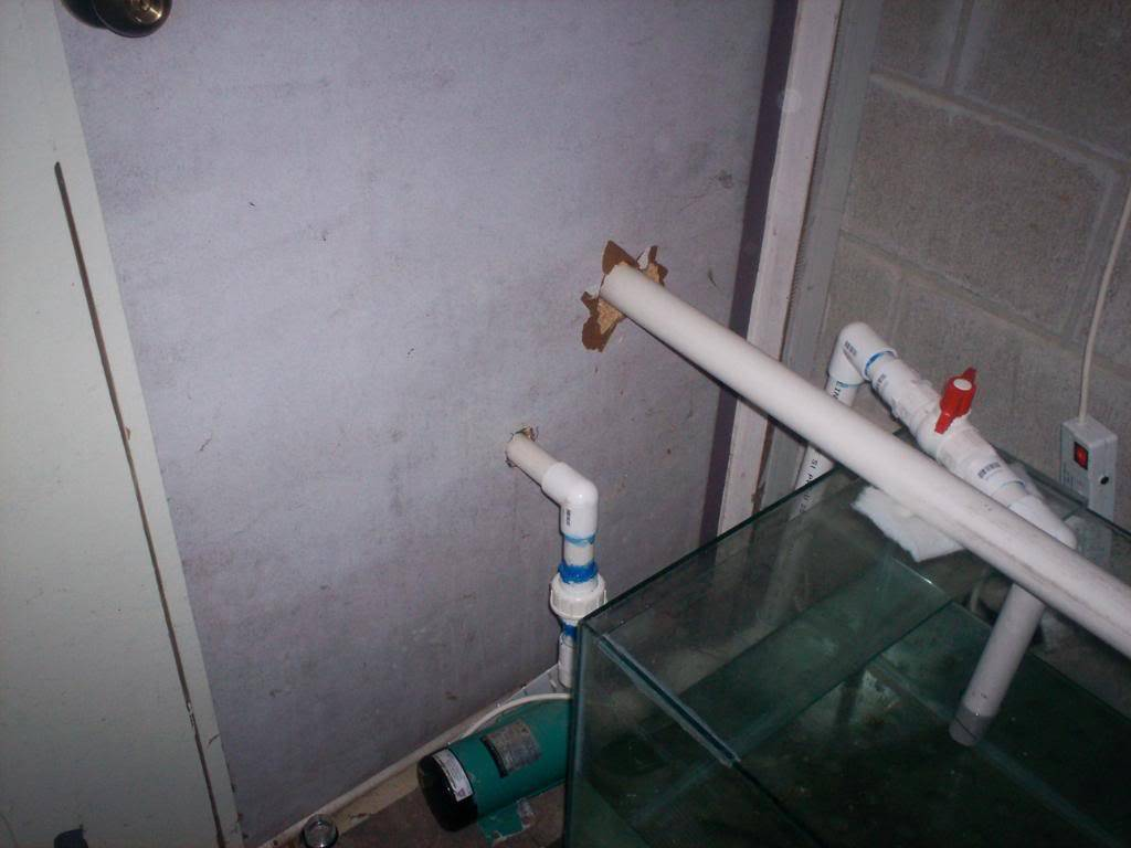 My Coldwater Setup From New Zealand 100_0635