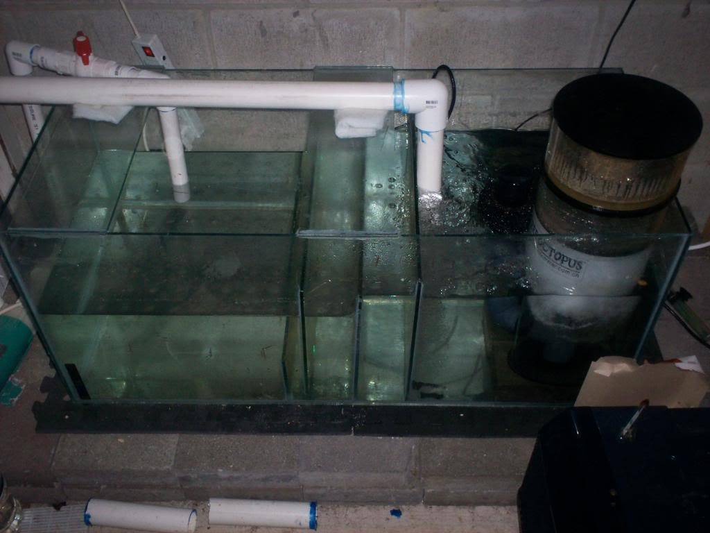 My Coldwater Setup From New Zealand 100_0636