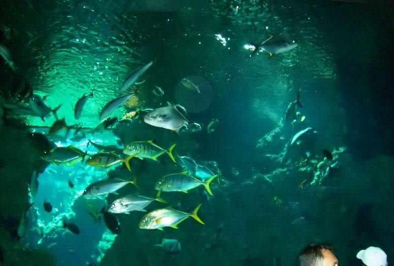 Musée océanographique de monaco 2000404762680999972_rs