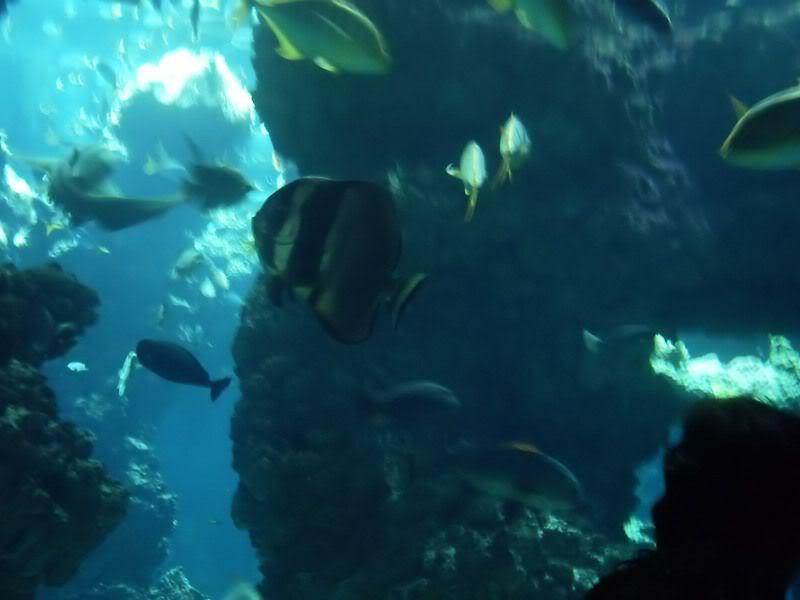 Musée océanographique de monaco 2000412397898190571_rs