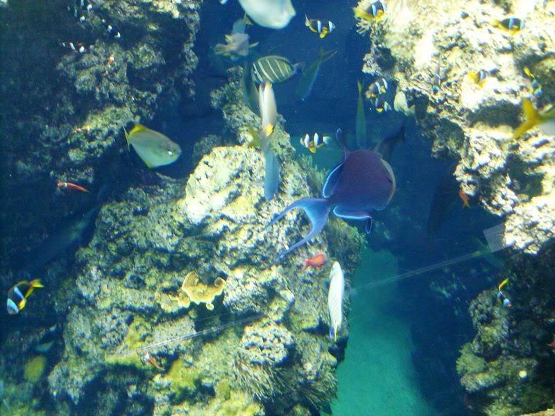 Musée océanographique de monaco 2000413312075599257_rs
