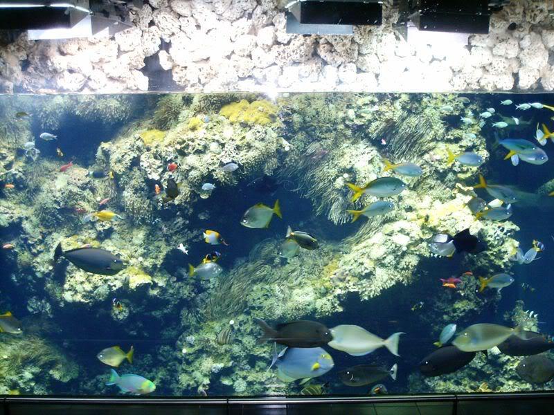 Musée océanographique de monaco 2000419417874614580_rs