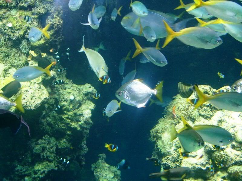 Musée océanographique de monaco 2000432699243316839_rs