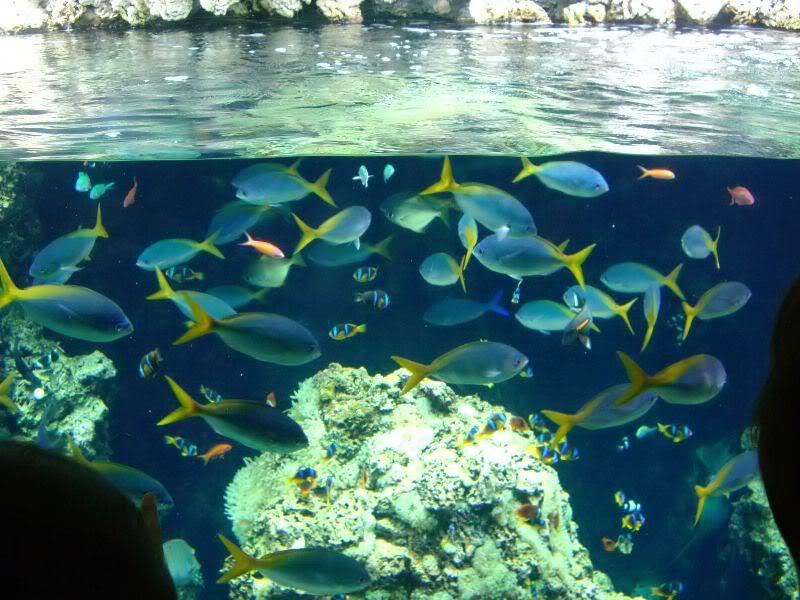 Musée océanographique de monaco 2000476476948370925_rs