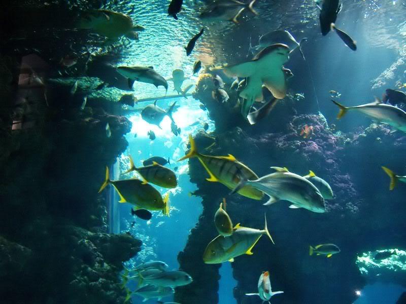 Musée océanographique de monaco 2000487266979482696_rs