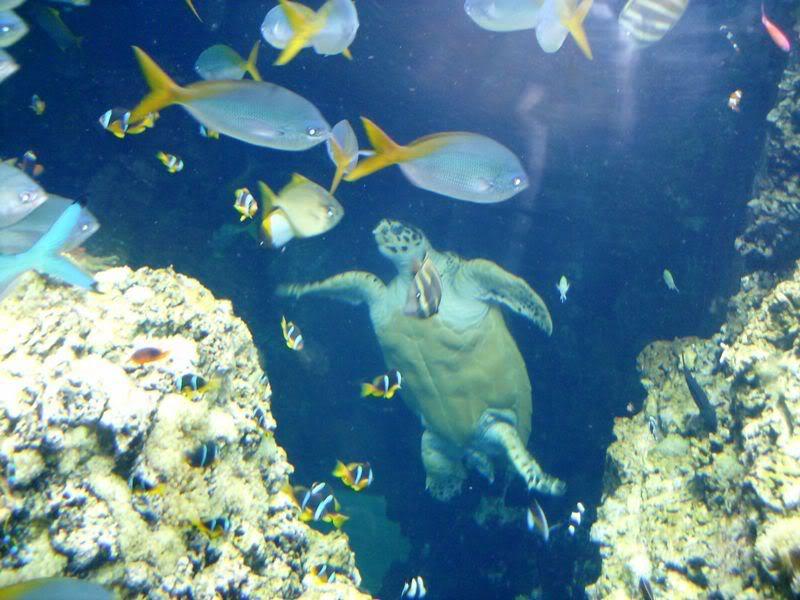 Musée océanographique de monaco 2000493663935942239_rs