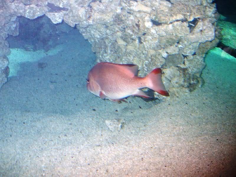 Musée océanographique de monaco 2001483338303672568_rs