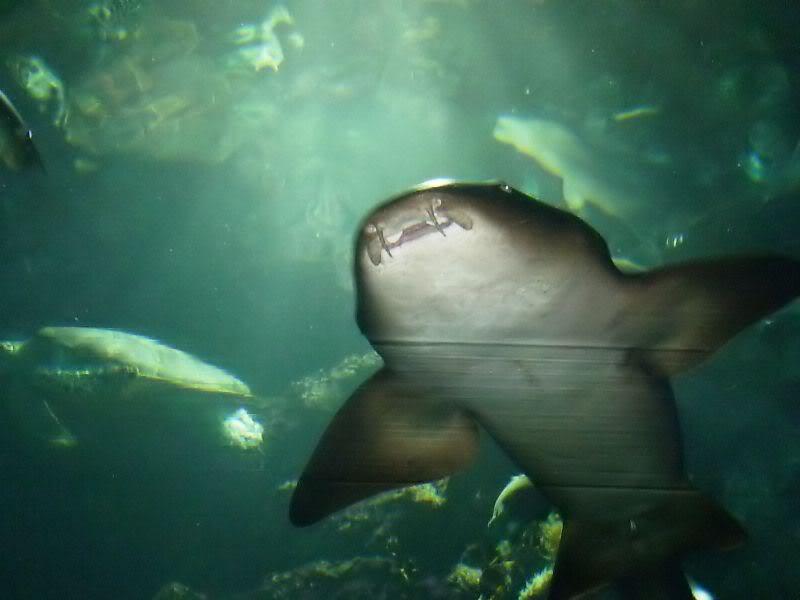 Musée océanographique de monaco 2001486020363578921_rs
