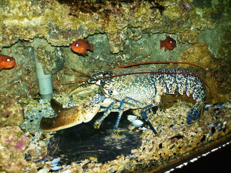 Musée océanographique de monaco 2001514686606214521_rs