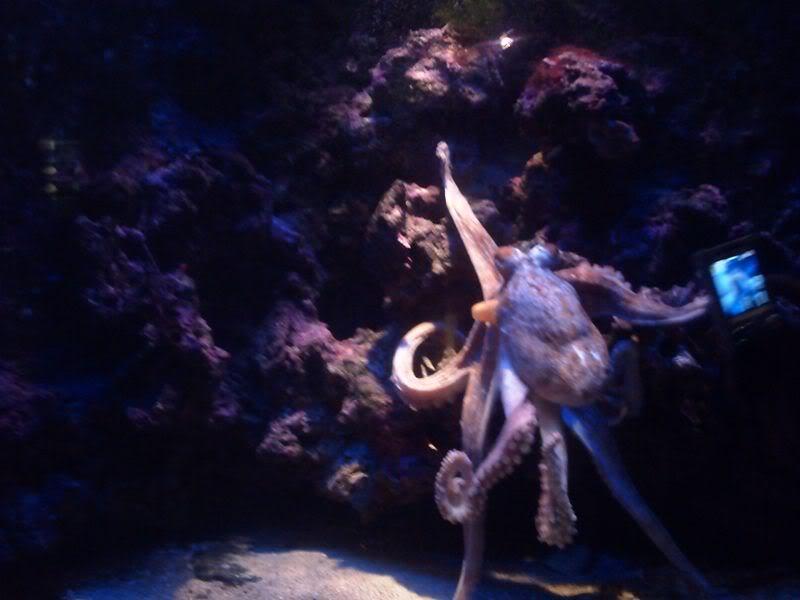 Musée océanographique de monaco 2001527220382829043_rs