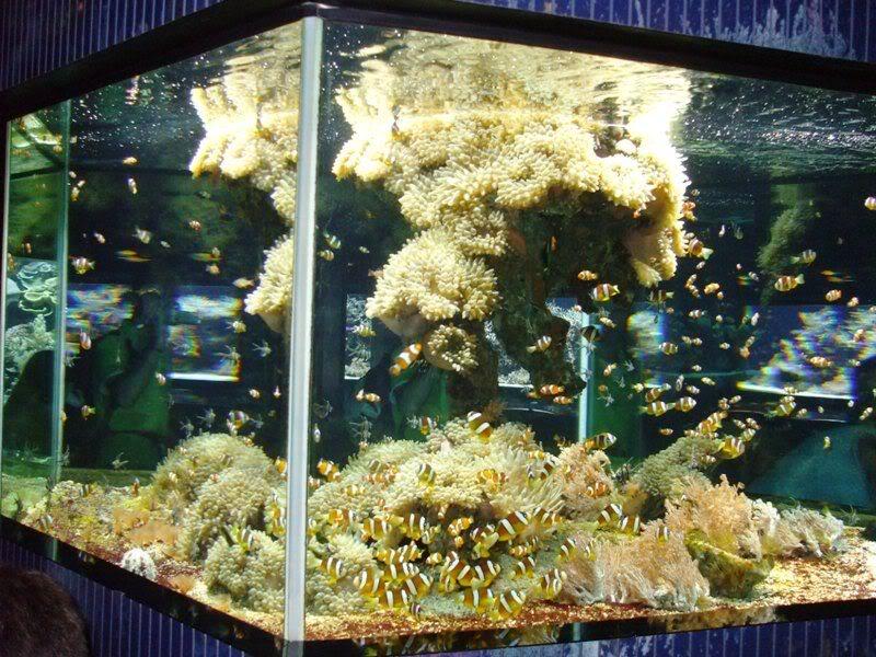 Musée océanographique de monaco 2001528372836817410_rs