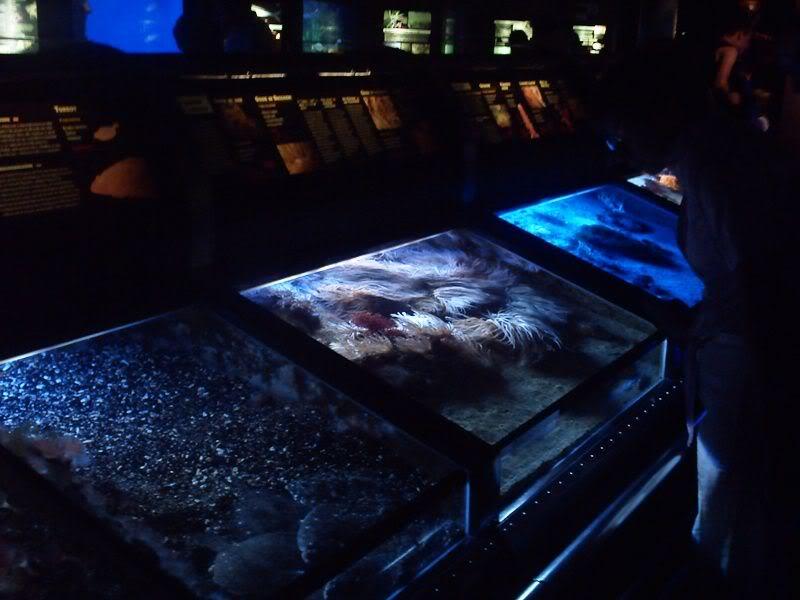Musée océanographique de monaco 2001555434780481621_rs
