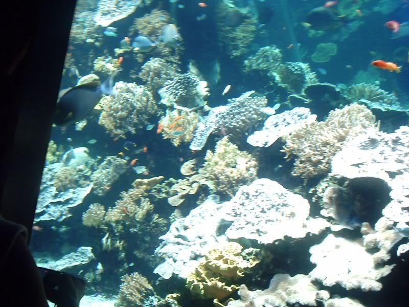 Musée océanographique de monaco 2001595655120206088_rs
