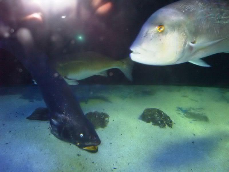 Musée océanographique de monaco 2001833366514502479_rs