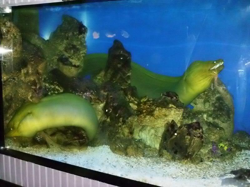 Musée océanographique de monaco 2001852526727929762_rs