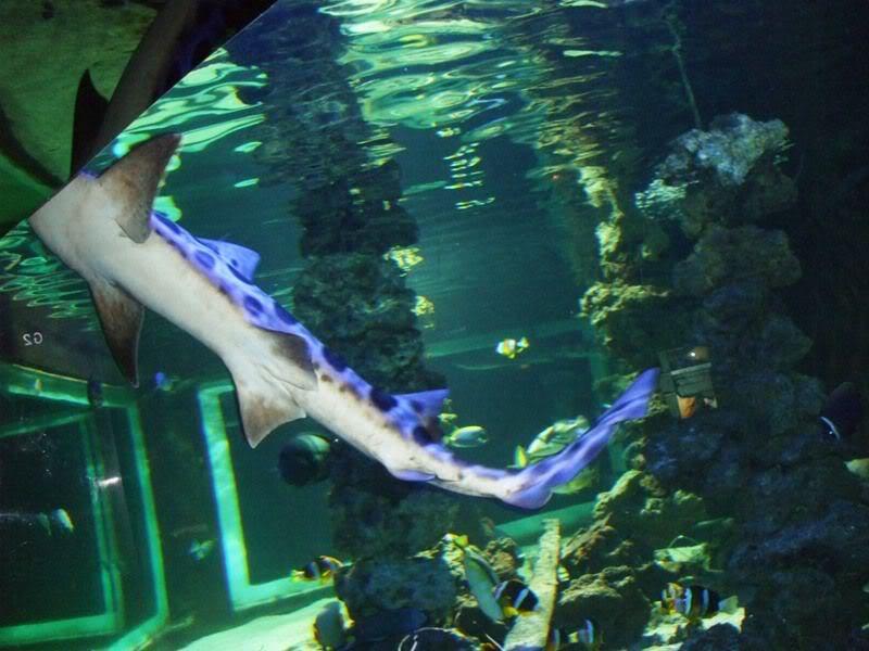 Musée océanographique de monaco 2001870097883094168_rs