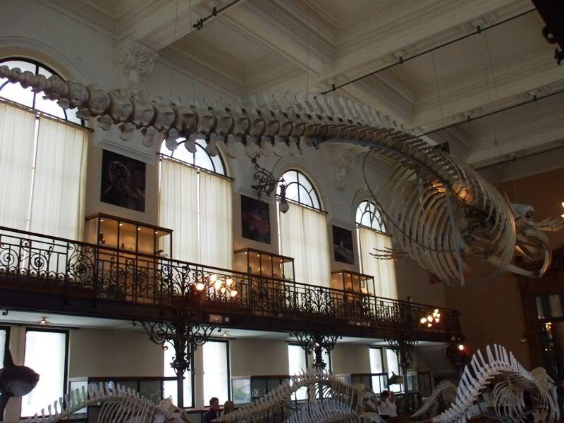 Musée océanographique de monaco 2004412822456938445_rs