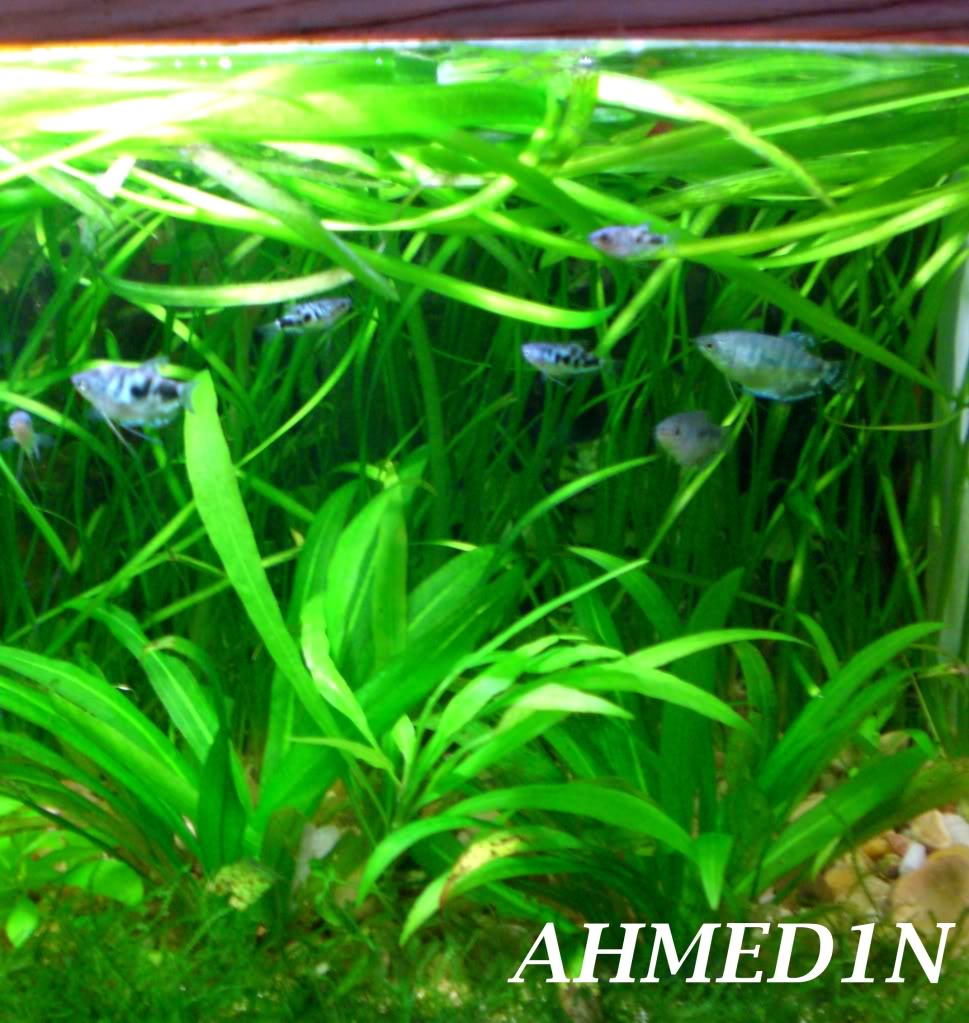 Some pictures from my aquariums CIMG1676